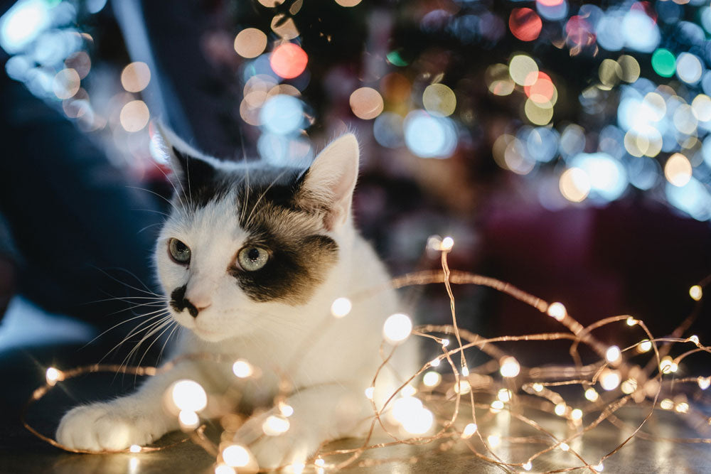 Keeping your pets healthy this Christmas
