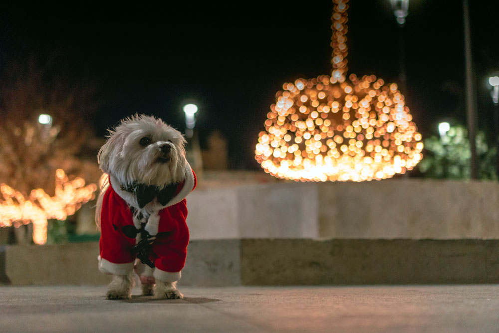 Is it OK to dress your pet in a Christmas jumper?