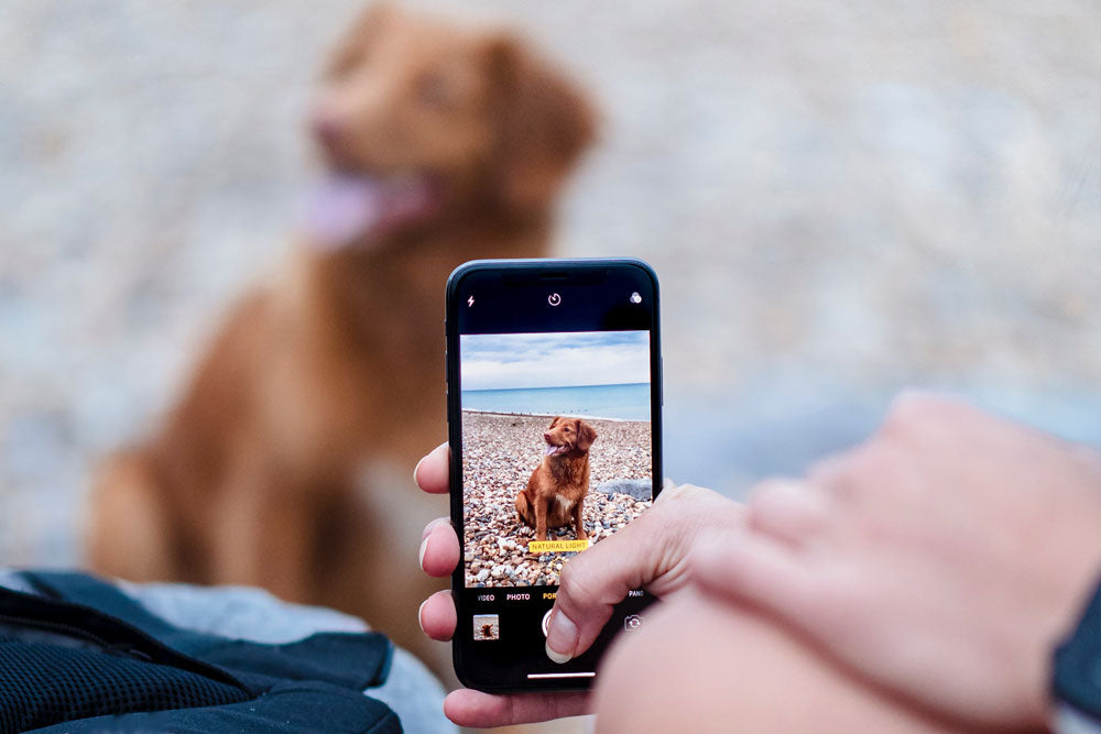 UK pet owners take more photos of their pets than of their family
