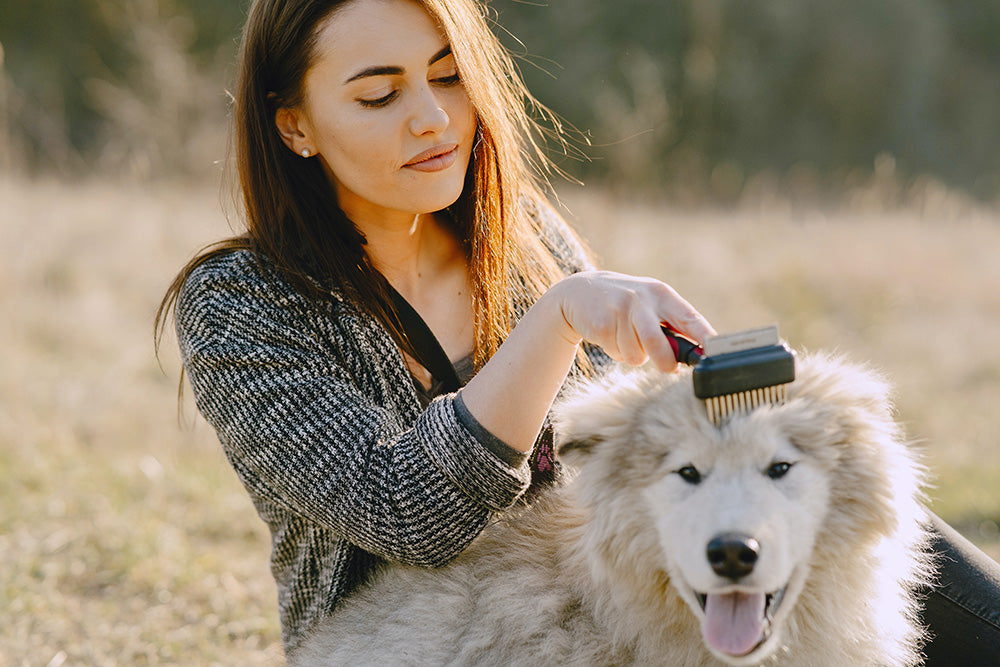 How to groom your dog at home