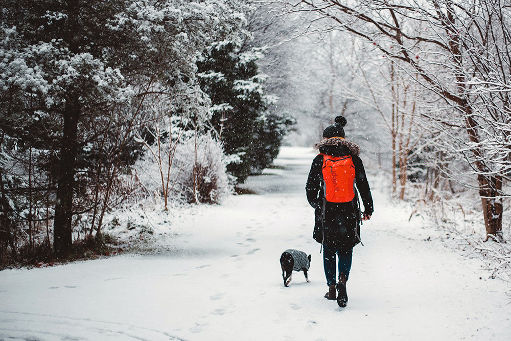 Taking care of your dog this winter
