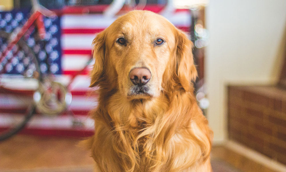 All American smelly dog Photo by Caleb Fisher on Unsplash