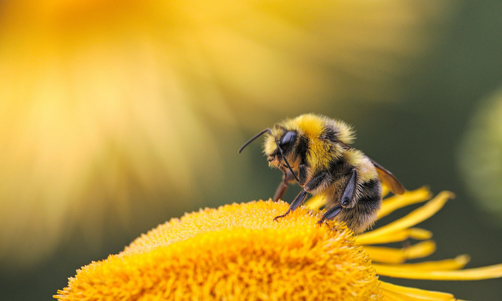 Bee Photo by Dmitry Grigoriev on Unsplash