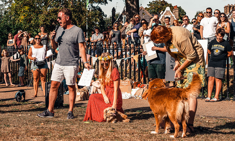A companion dog show: Photo by Sebastian Coman Travel on Unsplash