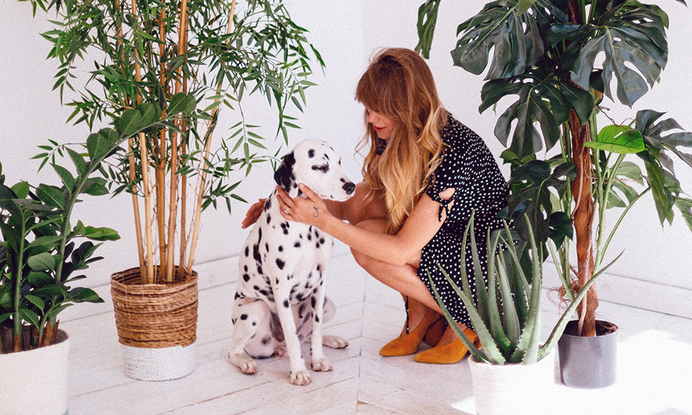 Dalmatian with plants: Photo by Daria Shevtsova from Pexels