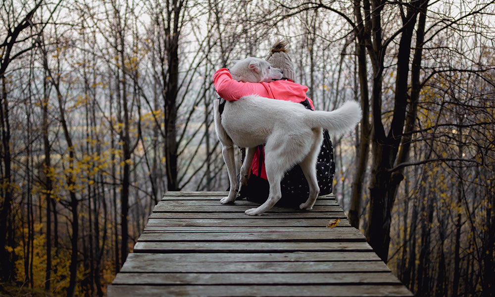 Dog Cuddles: Photo by Marek Szturc on Unsplash
