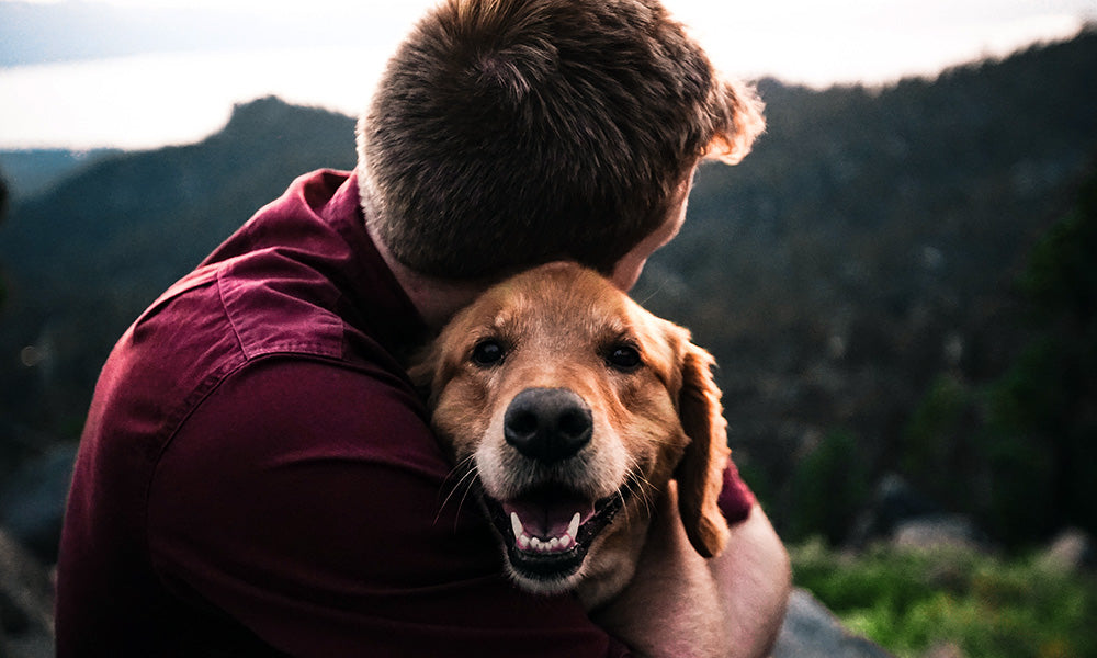 Dog hug: Photo by Eric Ward on Unsplash