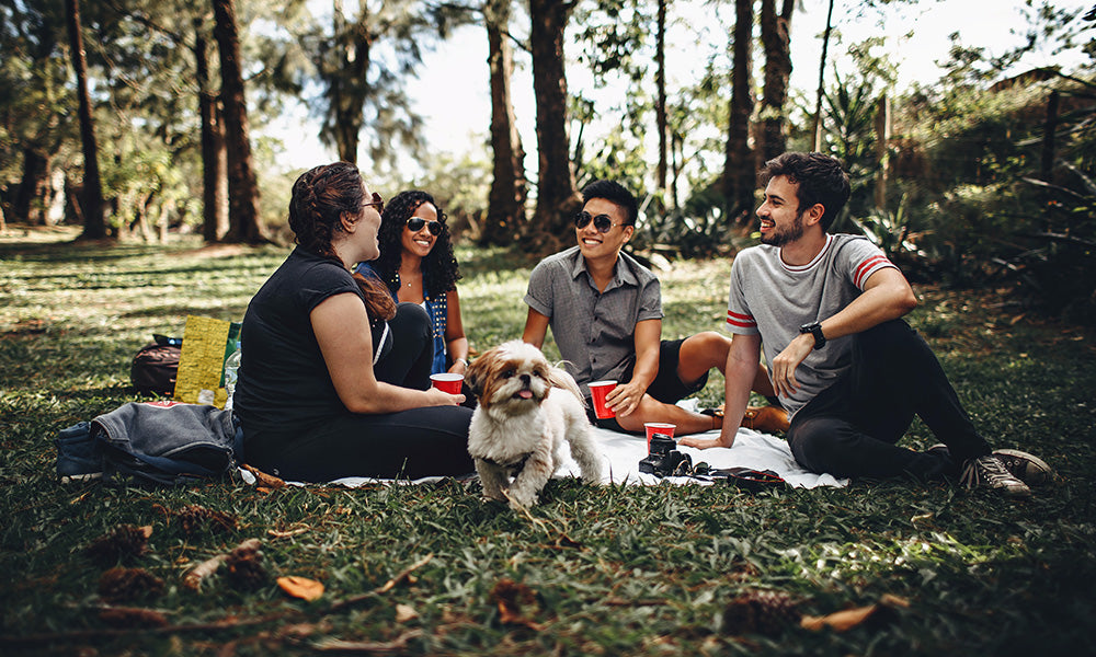 Dog at a picnic: Photo by Helena Lopes from Pexels