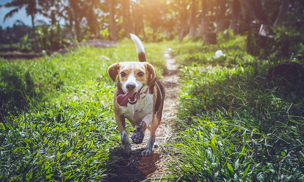Dog exploring: Photo by Artem Beliaikin from Pexels
