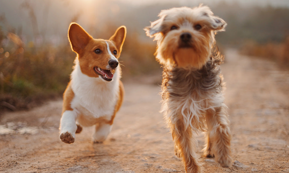 Happy dogs Photo by Alvan Nee on Unsplash