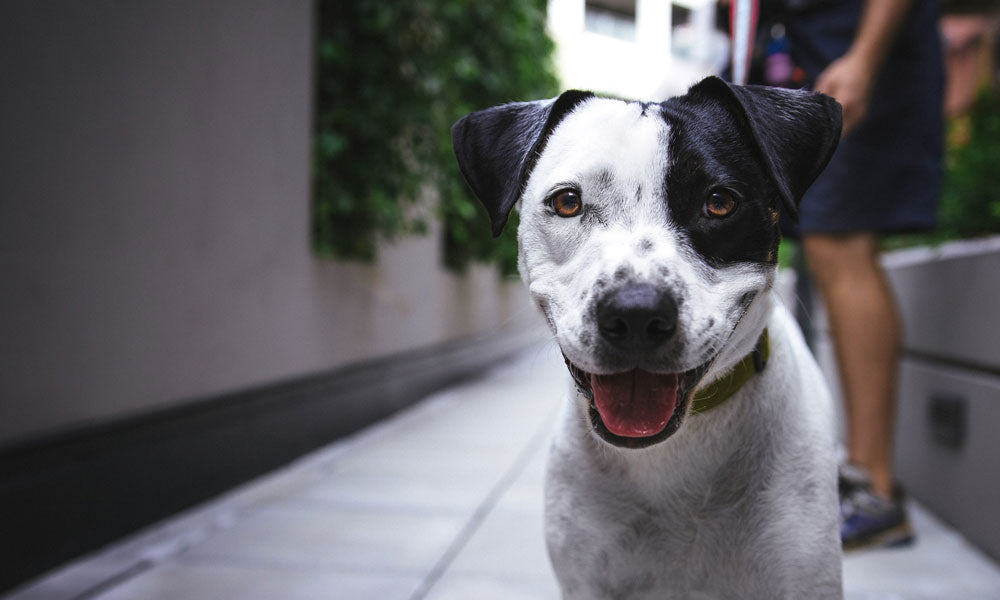 Dog Photo by Justin Veenema on Unsplash