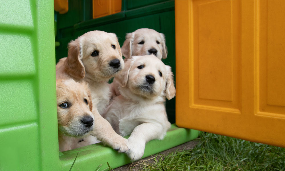 Lab puppies photo by Steve Sewell on Unsplash