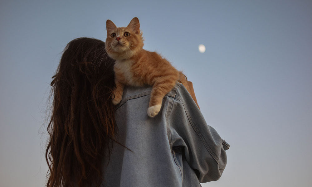 Ginger cat Photo by Anna Tello on Unsplash