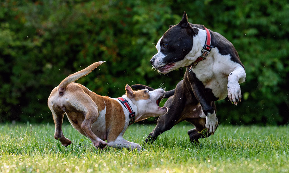 Dogs playing Photo by David Taffet on Unsplash