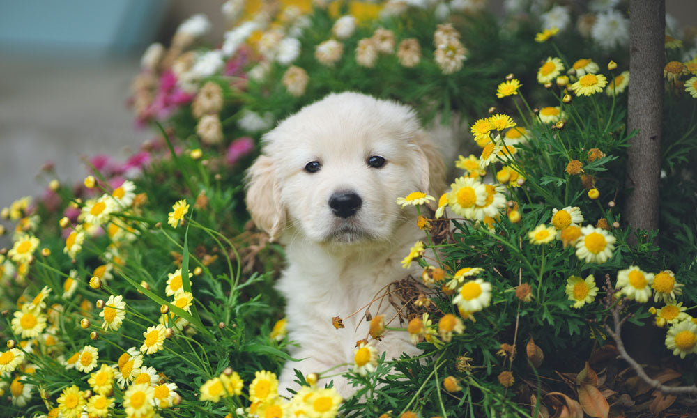 Puppy Photo by Hendo Wang on Unsplash