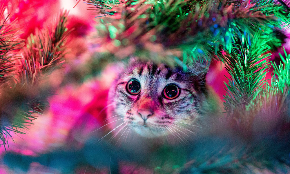 Christmas tree cat Photo by Andréas Brun on Unsplash