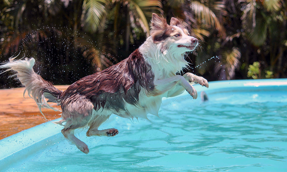 Dog swimming: Photo by Murilo Viviani on Unsplash