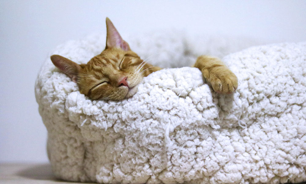 Snuggly cat Photo byАлександар ЦветановићfromPexels