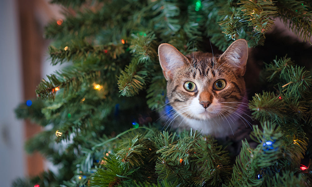 Tabby in a Christmas Tree Photo by Jessica Lewis on Unsplash