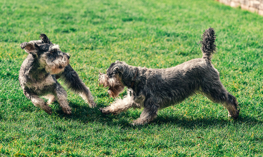 Dogs playing Photo by Sebastian Coman Travel on Unsplash
