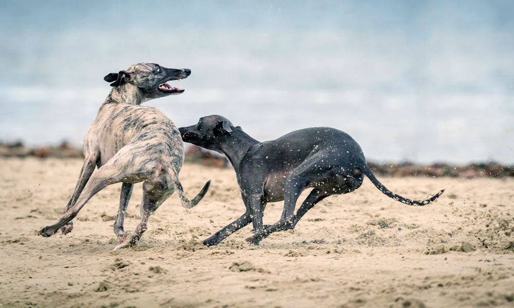 Dogs running Photo by Mark Galer on Unsplash