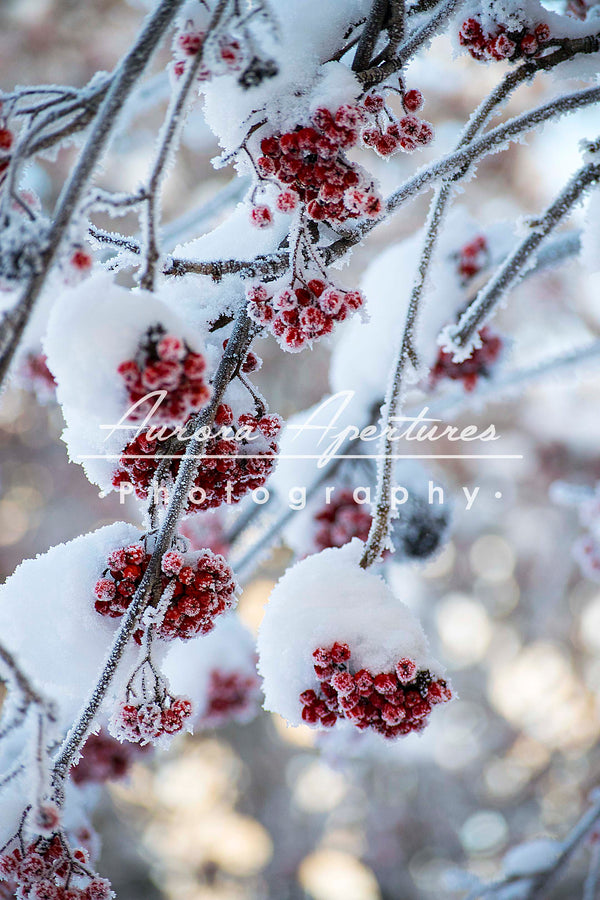 **Sea life center donation; reserved for Jenn Heath** Alaska Hoar Frost print IMG 978