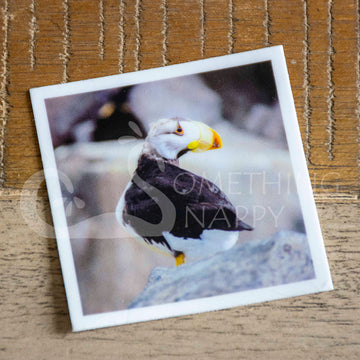 """Puffin Profile"" puffin stickers"