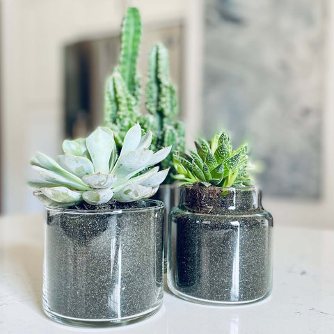 Pour & Penchant Scented Candle Jar Reuse for Planter