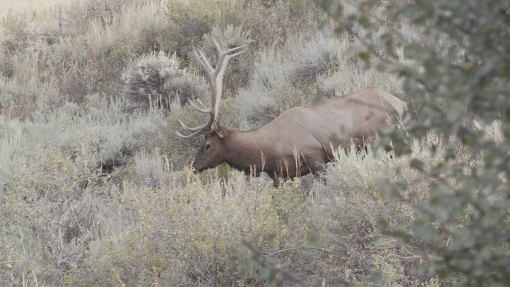 Physical Preparation For Elk
