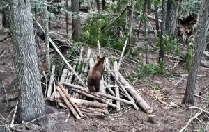 DIY Spring Bear Hunting