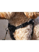 Load image into Gallery viewer, Rosewood Coastal Front-Connect Padded Harness