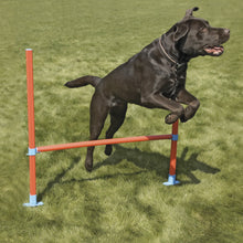 Load image into Gallery viewer, The Rosewood Dog Agility Hurdle