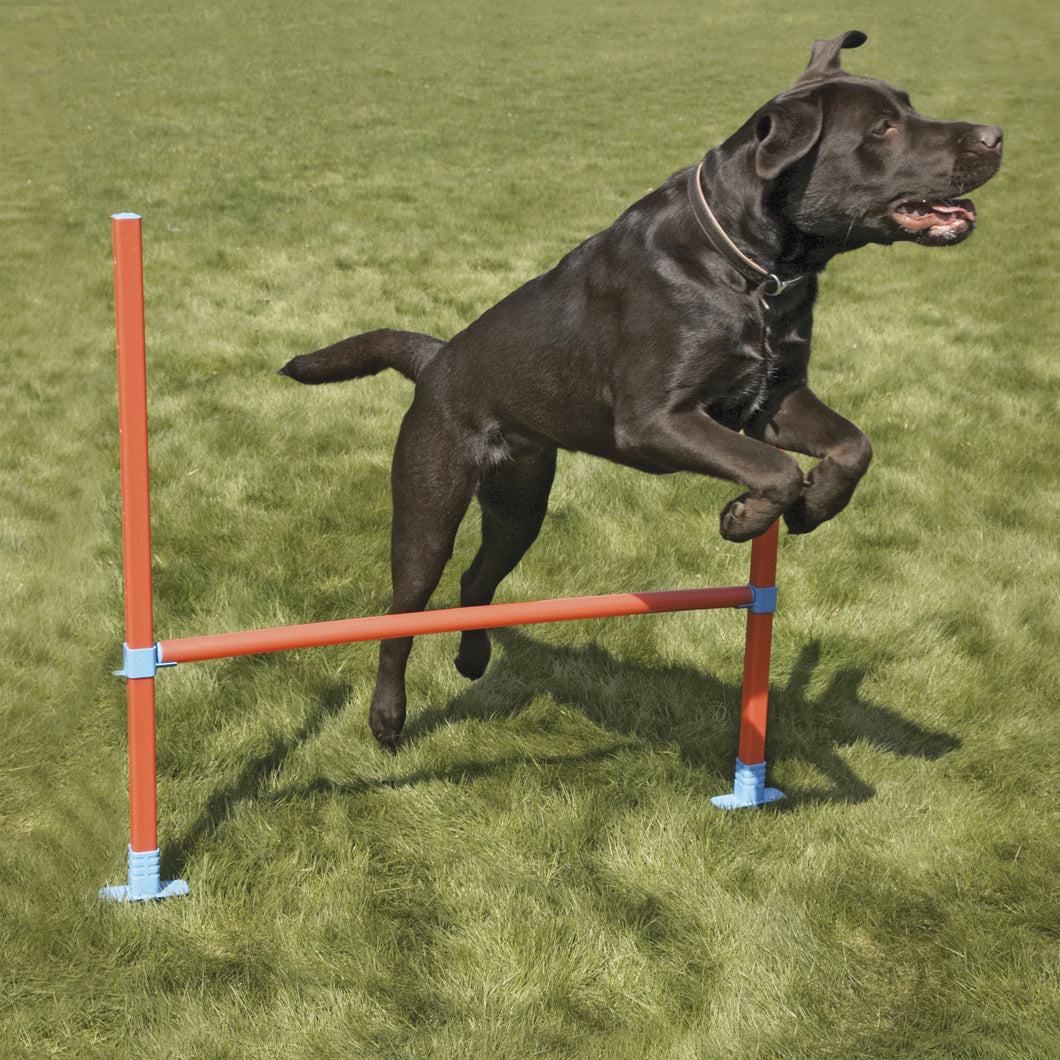 The Rosewood Dog Agility Hurdle