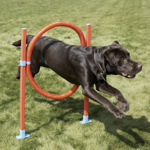 The Rosewood Dog Agility Hoop Jump