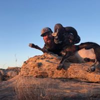 Arizona Wild Pig Hunt