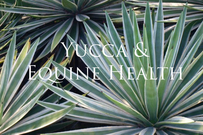 Yucca and Equine Health