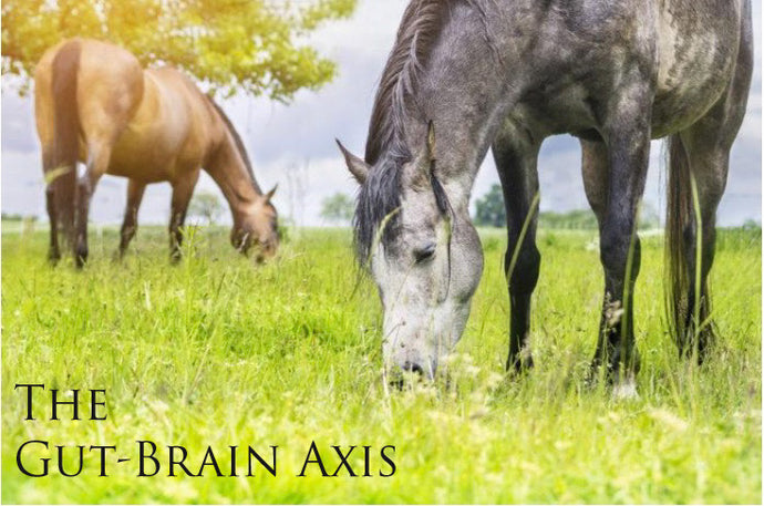 Your Horse's Gut-Brain Connection
