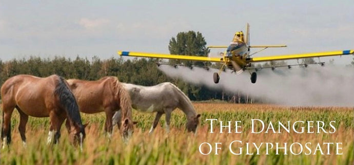 Glyphosate (RoundUp) and Horses; What You Need To Know