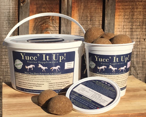 Yucc' It Up!™ Gastric Support *Mini Pack*