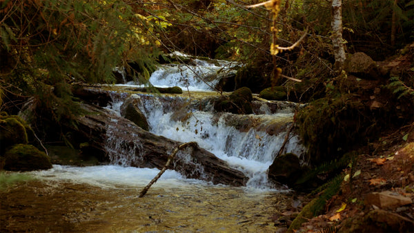 Forest-Waterfall-01-pv-wm.mp4