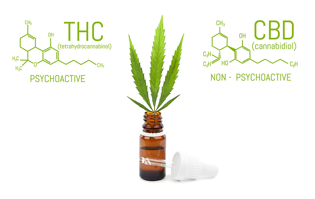thc vs cbd chemical makeup