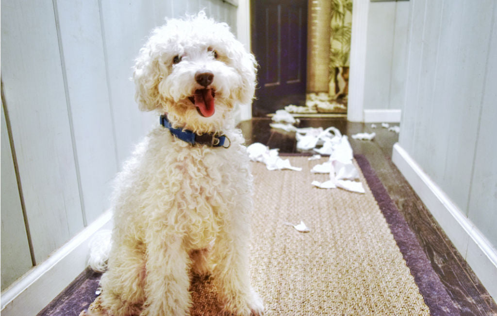 dog and torn up toilet paper