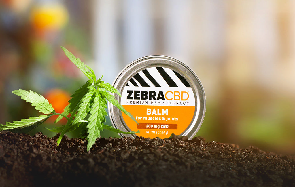 How Do the Ingredients in Zebra CBD Balm Support Muscle and Joint Health?