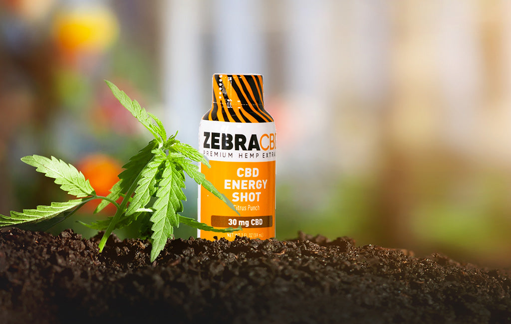 Zebra CBD Energy Shot