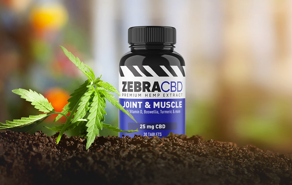 Zebra CBD Joint & Muscle Tablets in hemp garden