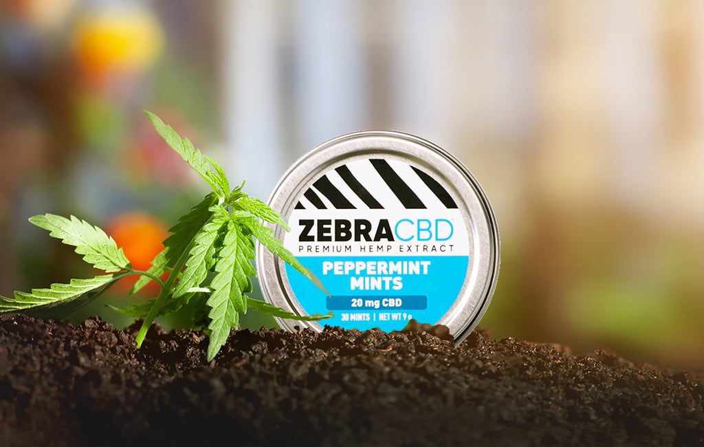 zebra cbd peppermint mints in hemp garden