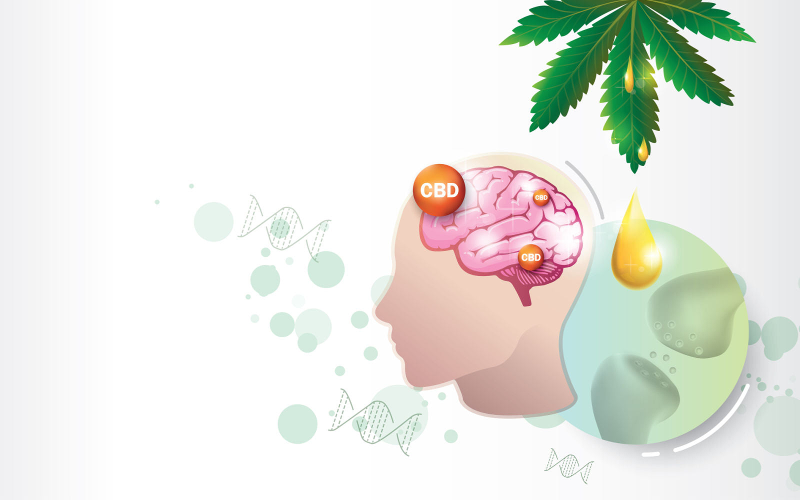 Brain and human endocannabinoid system HES