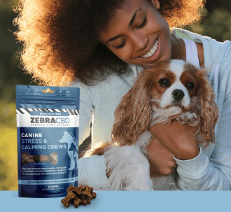 Zebra CBD canine chews and woman with Brittany spaniel
