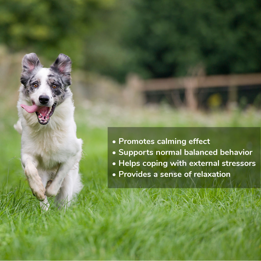 CBD Calming Chews For Dogs (2)