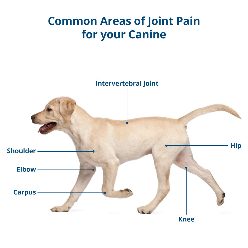 CBD for joint pain in dogs - areas of pain